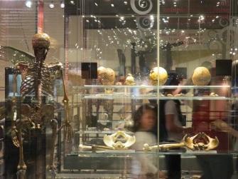 Cumpleaños en el Museo Nacional de Ciencias Naturales. Plan muy divertido para los niños en Madrid